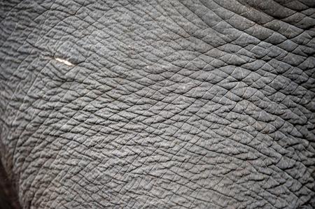 près de la peau d'éléphant