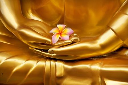 Frangipani in de hand van het beeld boeddha
