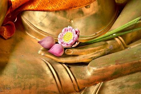 old macro: Lotus a la imagen de la mano de buda