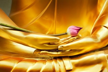 buda: Lotus en la imagen de la mano de buda