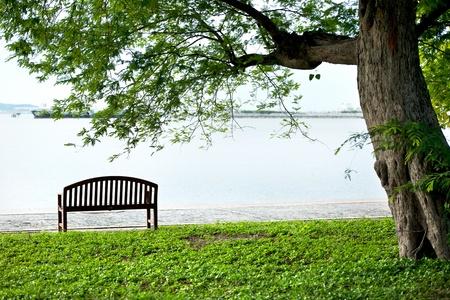 banc de parc: Banc en bois sous un arbre du parc Banque d'images