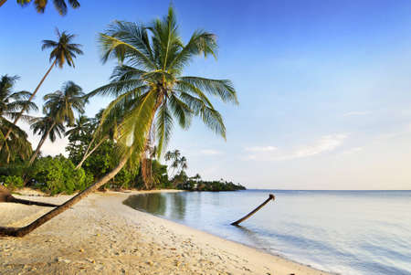 coconut tree and sea in thailand photo