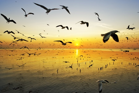 water birds: many seagull flying at sunset Stock Photo