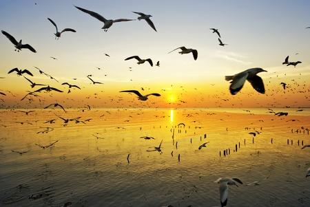dieren: veel zeemeeuw vliegen bij zonsondergang