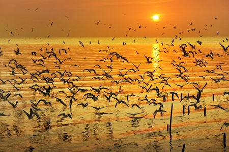 many seagull flying at sunset photo
