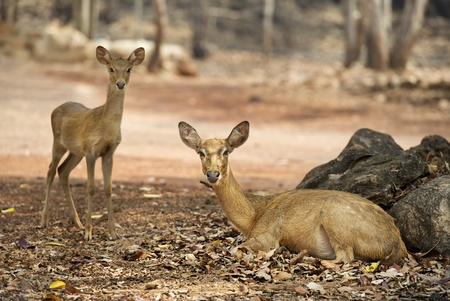 mother and baby deer: deer family Stock Photo