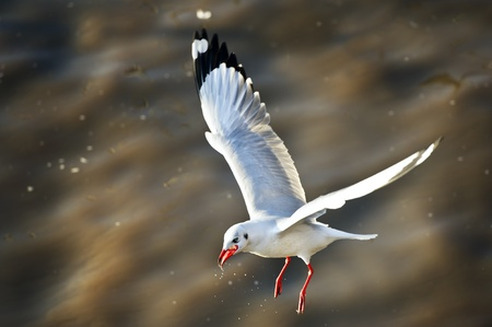 many seagull flying over sea photo