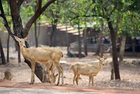 deer family photo
