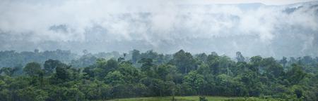 tropical rainforest ,thailand