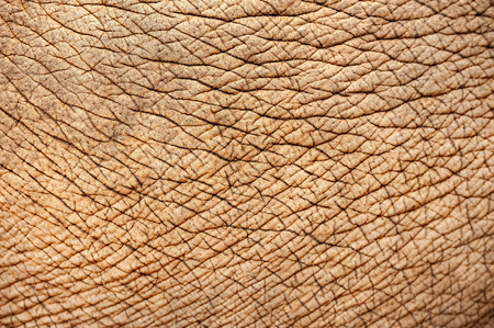 piel humana: de cerca de la piel de elefante