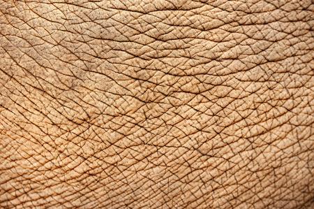 Gros plan de la peau d'éléphant