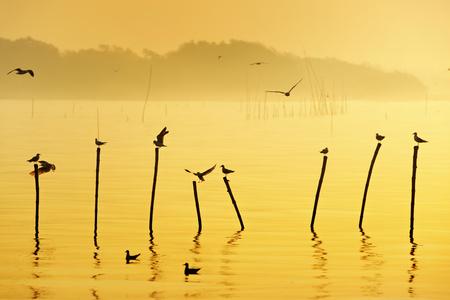 many seagull flying at sunrise