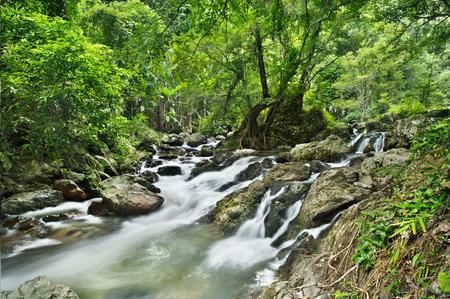 gill: waterfall in national park , Kamphaeng Phet , thailand