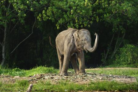 oscillate: Baby elephant enjoy