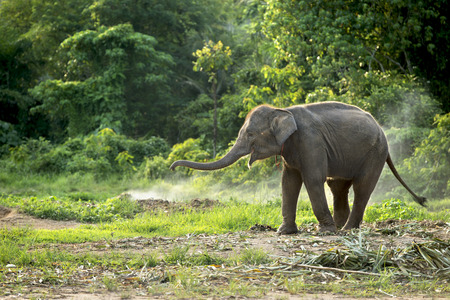 oscillate: Baby elephant enjoy in open zoo Stock Photo