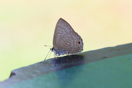 butterfly of Thailand photo