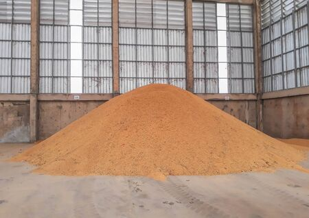 A pile of brown paddy rice seeds, rice stock seeds at the mill.
