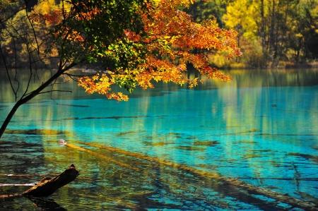 river scape: Lake in jiuzhaigou national park