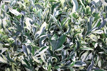 shrub: shrub