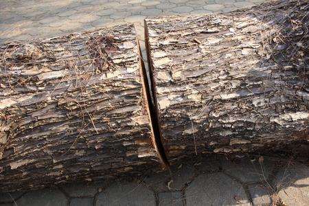 tree trimming: Wood Stock Photo