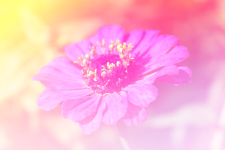 emanate: Flower bright background Stock Photo
