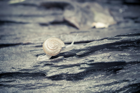 ul: snail Catch the stump,snail,beautif ul snail,snail on the wood,single snail,snail in raining day Stock Photo