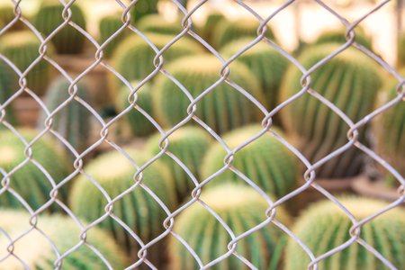 Abstract green cactus plant and steel net fence with blur background