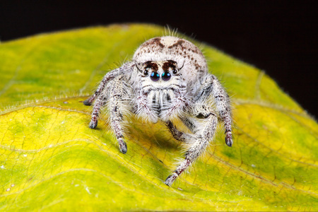 Small jump spider in summer season Stock Photo