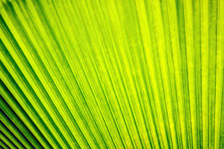 palm tree leaf in sunlight close-up