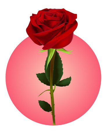 green and red: Rose (vector mesh)