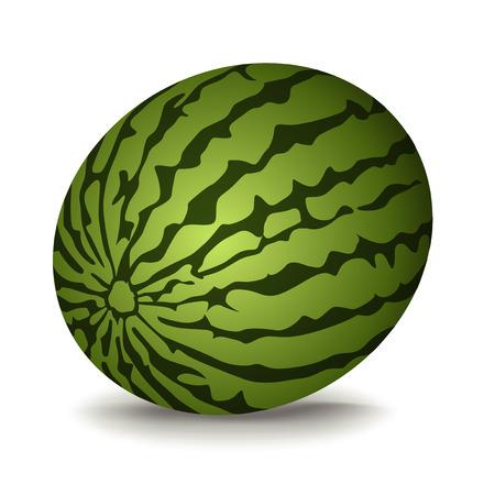 lycopene: watermelon vector illustration