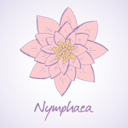 nymphaea: Vector sketch illustration of Lily Nymphaea