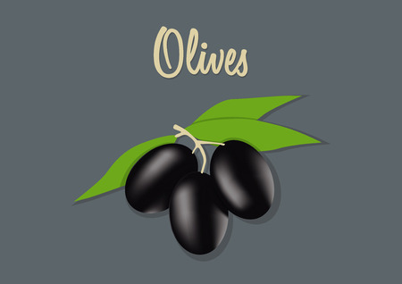 oil crops: vector illustration of black olives Illustration