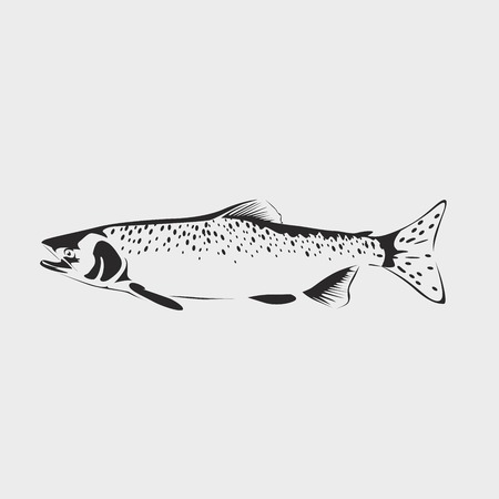 Vector salmon fish isolated on white background. Salmon fish icon Ilustração