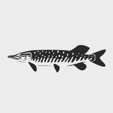 pike fish vector illustration on white background