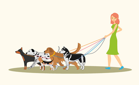 red haired: Cute red-haired girl walking many dogs of different breeds