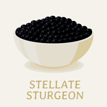 Vector illustration of the black stellate sturgeon caviar in a white plate.