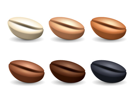 Different degrees of roasting coffee beans. Realistic vector set. Collection of coffee seeds isolated on the white background.