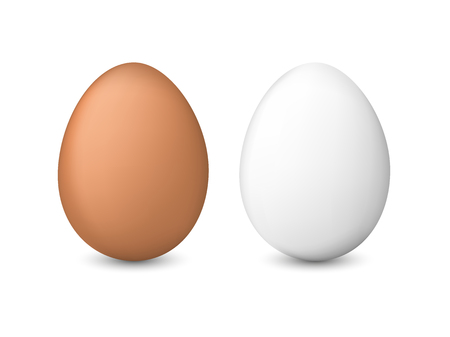 White and brown chicken eggs vector illustration