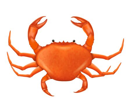 A Crab vector illustration in realistic style. Vector seafood product isolated on a white background.