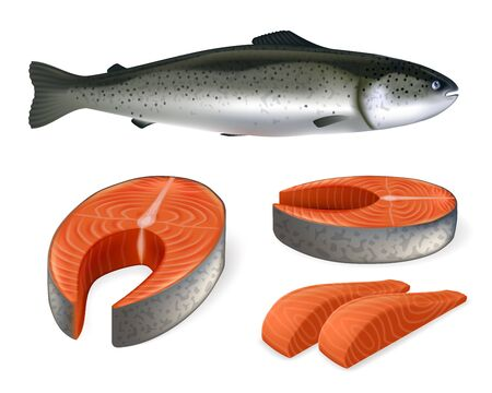 Salmon fish realistic vector illustration. Whole salmon, stakes and slices. 矢量图像