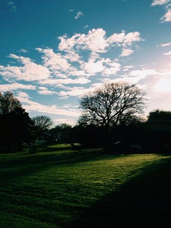 bluesky: Spring Day auckland