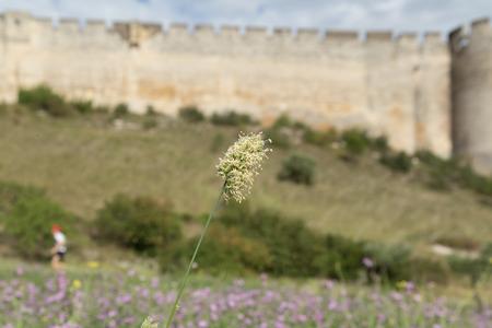 中世の城の壁フォート サン = アンドレの町のヴィルヌーヴ レ アヴィニョン (フランス ・ ラングドック = ルシヨン地域圏) で