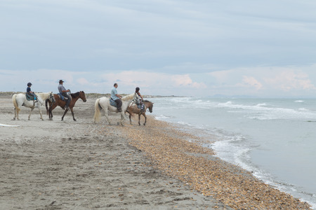 Horseback Riding on Beach near Sea in Camargue, France