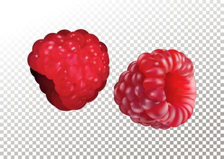 Vector illustration of ripe realistic raspberry on transparent background . Standard-Bild - 125459034