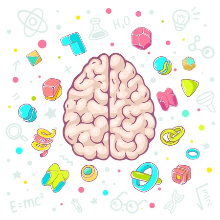 top model: Vector colorful illustration of model of human brain top view on white background with icons. Hand draw line art design for web, site, advertising, banner, poster, board, brochure and print. Illustration