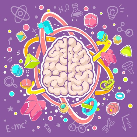 top model: Vector colorful illustration of model of human brain top view on purple background. Hand draw line art design for web, site, advertising, banner, poster, board, brochure and print. Illustration