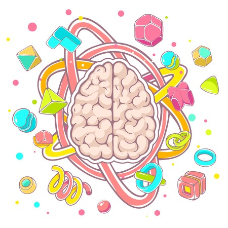 top model: Vector colorful illustration of model of human brain top view on white background. Hand draw line art design for web, site, advertising, banner, poster, board, brochure and print. Illustration