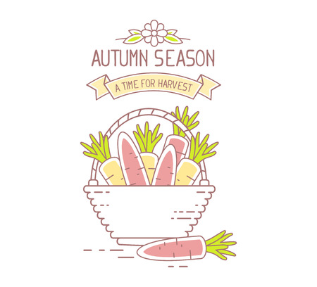 harvest time: Agribusiness. Vector illustration of wicker basket filled with orange tasty carrots isolated on white background. Harvest time. Autumn season. Thin line art flat design of harvest of carrot for farming and agricultural theme
