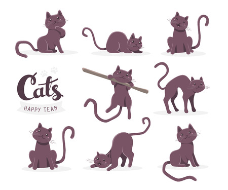 pussy hair: Vector collection of illustration of cute dark cat in various poses and text with cat paw prints on white background. Flat style design for greeting card, poster, web, site, banner, sticker, logo Illustration